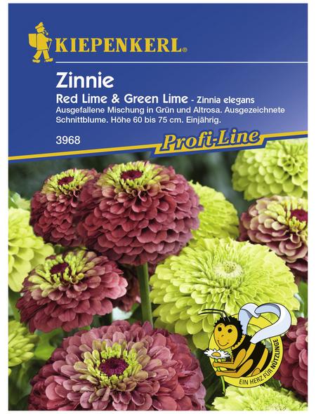 KIEPENKERL Zinnie, Zinnia angustifolia, Samen, Blüte: mehrfarbig