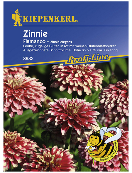 KIEPENKERL Zinnie, Zinnia elegans, Samen, Blüte: mehrfarbig
