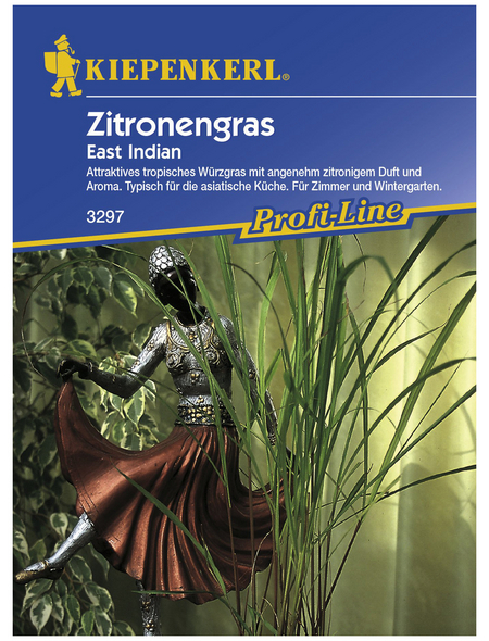KIEPENKERL Zitronengras citratus Cymbopogon