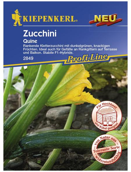 KIEPENKERL Zucchini pepo Cucurbita