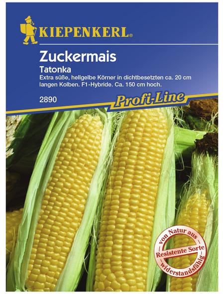 KIEPENKERL Zuckermais mays ssp. saccharata Zea