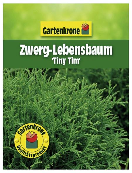 GARTENKRONE Zwerg-Lebensbaum, Thuja occidentalis »Tiny Tim«, winterhart