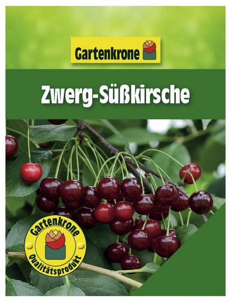 GARTENKRONE Zwerg-Süßkirsche, Prunus fruticosa, Früchte: süß-säuerlich, zum Verzehr geeignet