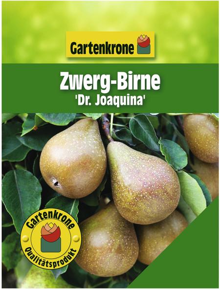 GARTENKRONE Zwergbirne, Pyrus communis »Dr. Joaquina«, Früchte: süß, zum Verzehr geeignet