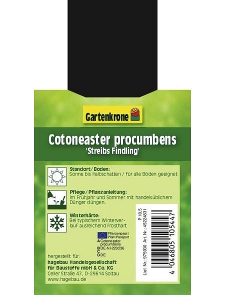 GARTENKRONE Zwergmispel, Cotoneaster Procumbens »Streibs Findling«, weiß, winterhart