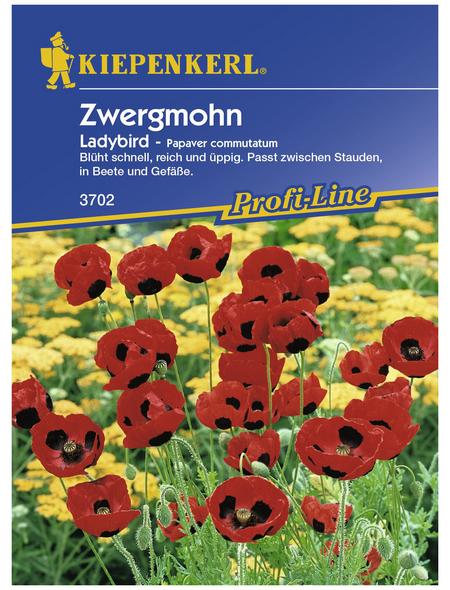 KIEPENKERL Zwergmohn, Papaver commutatum, Samen, Blüte: rot
