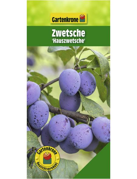 GARTENKRONE Zwetsche, Prunus, Früchte: süß-säuerlich, zum Verzehr geeignet
