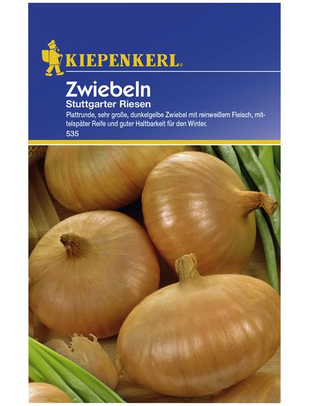 KIEPENKERL Zwiebel cepa Allium