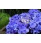 , Topf: 23 cm, Farbe: blau-Thumbnail