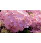 , Topf: 23 cm, Farbe: rosa-Thumbnail