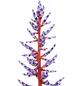 GARTENKRONE Aechmea fasciata Blue Rain-Thumbnail