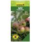 GARTENKRONE Apfel, Malus domestica »Gravensteiner«, Früchte: süß, zum Verzehr geeignet-Thumbnail