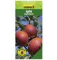 GARTENKRONE Apfel, Malus domestica »Ingrid Marie«, Früchte: süß-säuerlich, zum Verzehr geeignet-Thumbnail