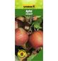 GARTENKRONE Apfel, Malus domestica »Jonagold«, Früchte: süß-säuerlich, zum Verzehr geeignet-Thumbnail