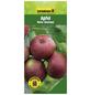 GARTENKRONE Apfel, Malus domestica »Roter Boskoop«, Früchte: sauer, zum Verzehr geeignet-Thumbnail