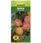 GARTENKRONE Aprikose, Prunus armeniaca »Early Orange«, Früchte: süß, zum Verzehr geeignet-Thumbnail