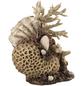 OASE Aquariendeko, biOrb Korallen-Muschel Ornament-Thumbnail