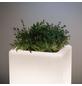 PAULMANN Außenleuchte »Plug & Shine Plant «, 6,5 W, dimmbar-Thumbnail