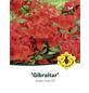 Azalee, Azalea knaphill »Gibraltar«, orange, Höhe: 40 - 50 cm-Thumbnail
