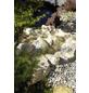 OASE Bachlaufbecken, Polyurethan (PU), sandfarben-Thumbnail