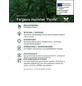 Bambus murielae Fargesia »Panda«-Thumbnail
