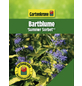 GARTENKRONE Bartblume, Caryopteris clandonensis »Summer Sorbet «, blau, winterhart-Thumbnail