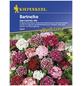 KIEPENKERL Bartnelke, Valerianella locusta, Samen, Blüte: mehrfarbig-Thumbnail