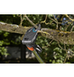 GARDENA Baum- und Strauchschneider , ausziehbar (Teleskop)-Thumbnail