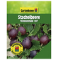 GARTENKRONE Beerenstrauch »Stachelbeere«, Creme-Thumbnail