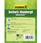 GARTENKRONE Berberitze, Berberis thunbergii »Admiration «, gelb, winterhart-Thumbnail