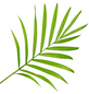 GARTENKRONE Bergpalme Chamaedorea elegans-Thumbnail