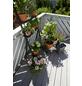 GARDENA Bewässerungssteuerung »city gardening«, Kunststoff-Thumbnail