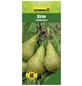 GARTENKRONE Birne, Pyrus communis »Conference«, Früchte: süß, zum Verzehr geeignet-Thumbnail