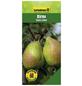GARTENKRONE Birne, Pyrus communis »Gute Luise«, Früchte: süß, zum Verzehr geeignet-Thumbnail