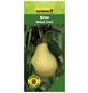 GARTENKRONE Birne, Pyrus communis »Williams Christ«, Früchte: süß, zum Verzehr geeignet-Thumbnail