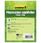 GARTENKRONE Blasenspiere, Physocarpus Opulifolius »Center Glow-R«, creme, winterhart-Thumbnail