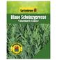 GARTENKRONE Blaue Scheinzypresse, Chamaecyparis lawsoniana »Columnaris Glauca«, winterhart-Thumbnail