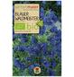 SAMEN MAIER Blauer Waldmeister-Thumbnail