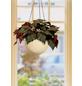 SCHEURICH Blumenampel »HANGING POT«, ØxH: 18 x 14,8 cm, creme-Thumbnail