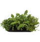 Blumenbag Kräuter mediterran 70 cm, Blütenfarbe: grün-Thumbnail