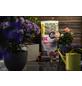 FLORAGARD Blumenerde »Bio«, für Rosen, torffrei-Thumbnail