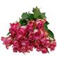Blumenstrauß mit Rosen   in pink, Ø 35 cm-Thumbnail