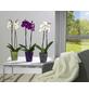 SCHEURICH Blumentopf »ORCHID«, Breite: 12,3 cm, creme, Keramik-Thumbnail