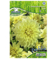 PEGASUS Blumenzwiebel Dahlie, Dahlia Hybrida, Blütenfarbe: gelb-Thumbnail