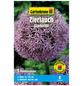 GARTENKRONE Blumenzwiebel »Gartenkrone Allium Gladiator«-Thumbnail