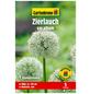 GARTENKRONE Blumenzwiebel »Gartenkrone Allium hirtifolium var.album«-Thumbnail