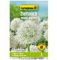 GARTENKRONE Blumenzwiebel »Gartenkrone Allium Mount Everest«-Thumbnail