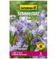 GARTENKRONE Blumenzwiebel »Gartenkrone Chionodoxa Luciliae«-Thumbnail