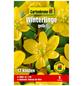 GARTENKRONE Blumenzwiebel »Gartenkrone Eranthis Hyemalis«-Thumbnail