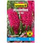 GARTENKRONE Blumenzwiebel »Gartenkrone Hyazinthe Jan Bos«-Thumbnail